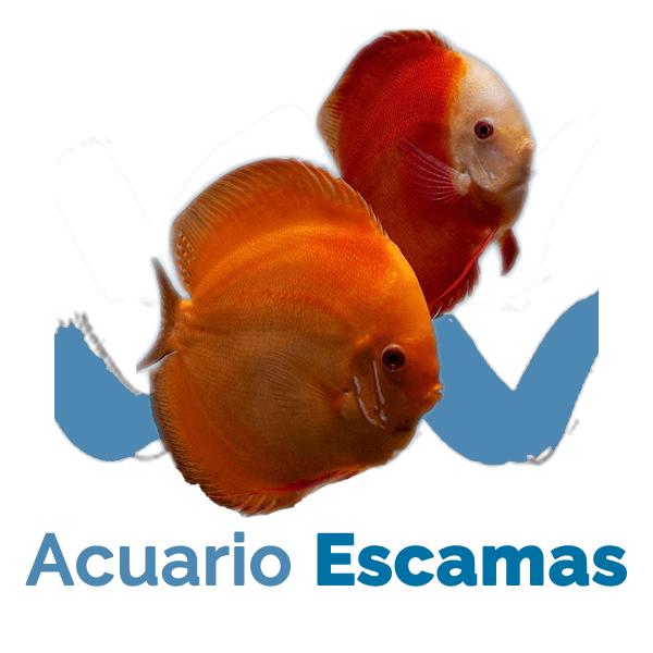 Acuario Escamas