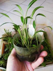 Plantas de tallo