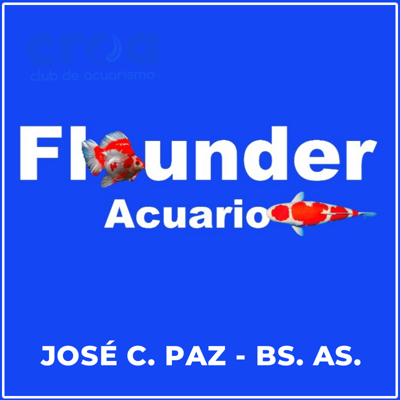 Flounder Acuario