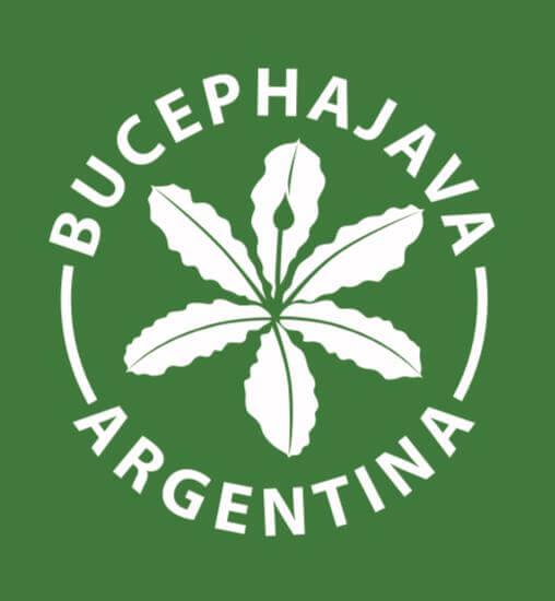 Bucephajava Argentina